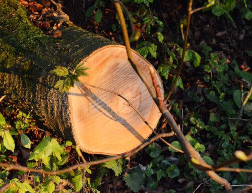 Сохранение и выращивание — это уважение к дереву